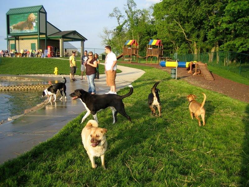 Власти Москвы будут обустраивать во дворах собачьи площадки с экоурнами. дом, собака, площадка, выгул, Москва