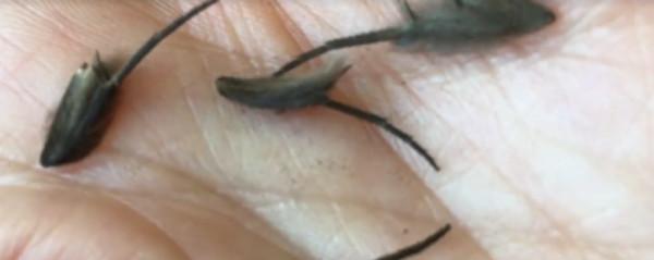 В Новой Зеландии нашли пугающих мохнатых существ. 15030.jpeg