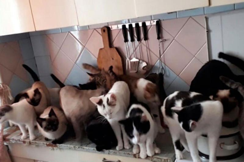Женщина поселила в квартире 60 кошек, теперь ее хотят выселить. дом, квартира, кошка, Барнаул