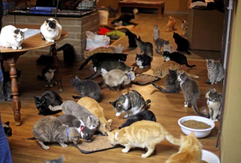 В канадской квартире нашли 300 кошек. дом, квартира, животные, домашние животные, кошки, Канада