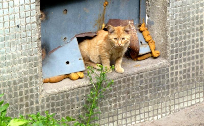 Службы ЖКХ обязали оставлять продухи для кошек в подвалах жилых домов. дом, квартира, подвал, жкх, кошка