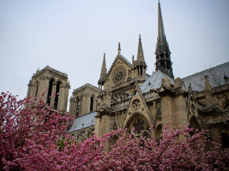 Архитекторы предложили создать огород на крыше Нотр-Дама. собор, собор Парижской Богоматери, Париж, Франция