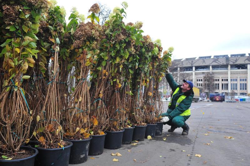В переулках Китай-города высадят более 900 кустарников. дом, квартира, кустарники, Китай-город, Москва
