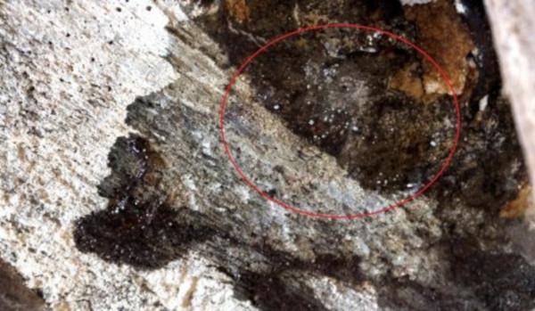 Специалисты удалили ртуть, которая закапала с потолка во время ремонта. 14192.jpeg