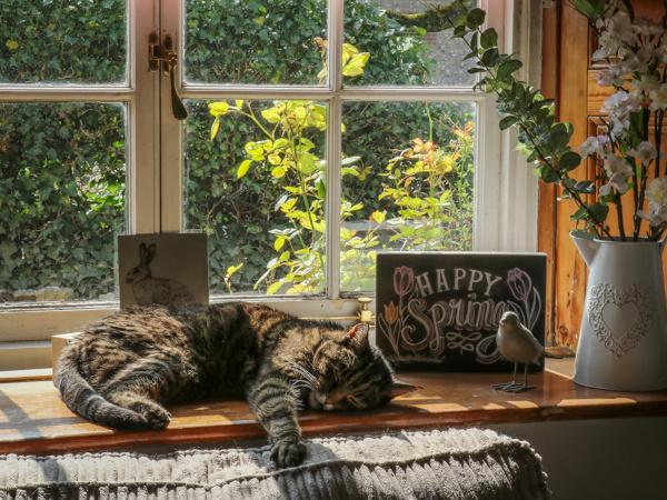 Москвичку, выбросившую кота из окна, будут судить. дом, окно, кот, Москва