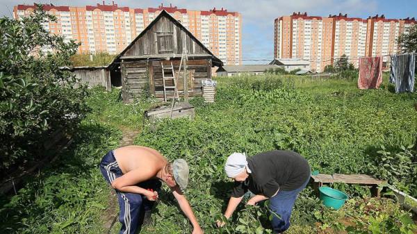 Дачникам России создадут службу одного окна. 15216.jpeg