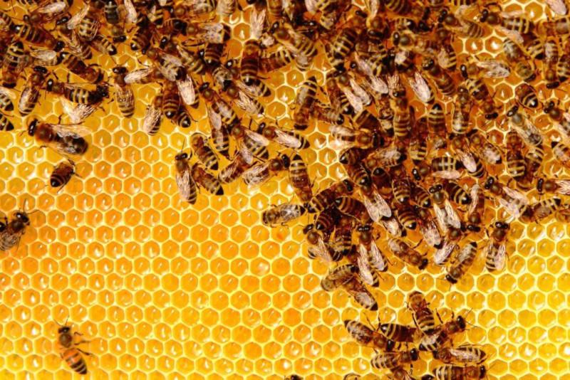 Испанская семья обнаружила 80 тысяч пчел в стене своей спальни. дом, квартира, спальня, стена, пчелы, улей, Испания
