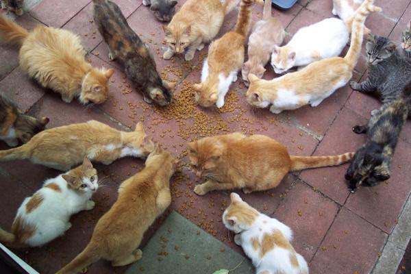 Как соблюдать порядок, если дома животные. 16292.jpeg