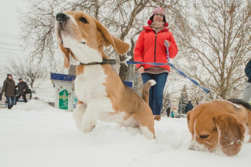 Во всех жилых районах Москвы будут обустроены площадки для собак. 15305.jpeg