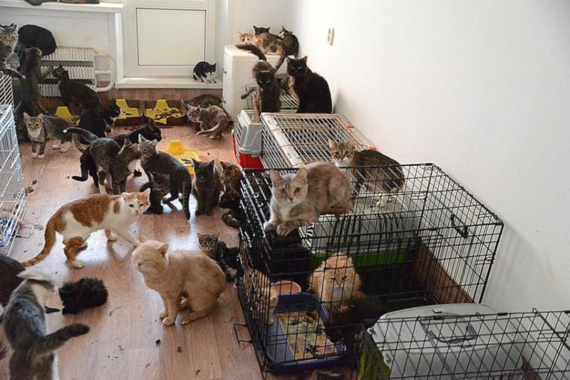 В квартире известного московского художника обнаружили 80 кошек. дом, квартира, животные, кошки, домашние животные, домашние питомцы, художник, Москва