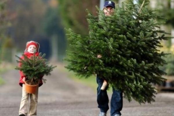 Как правильно выбрать искусственную елку к празднику. 14379.jpeg