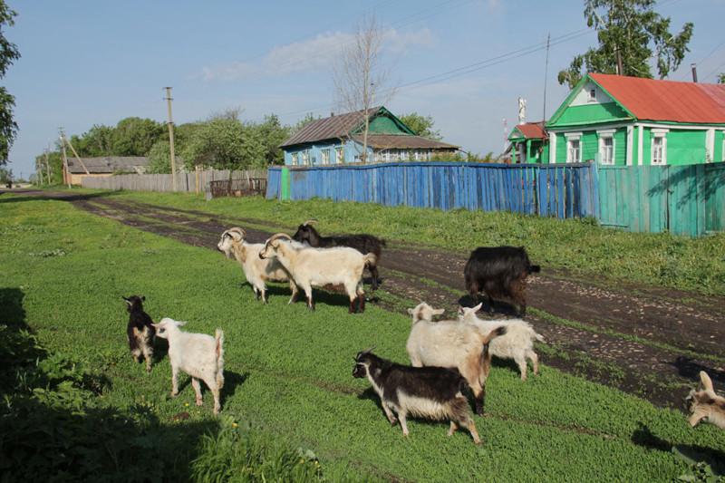 Село поднимут льготной ипотекой под 1% годовых. 15408.jpeg