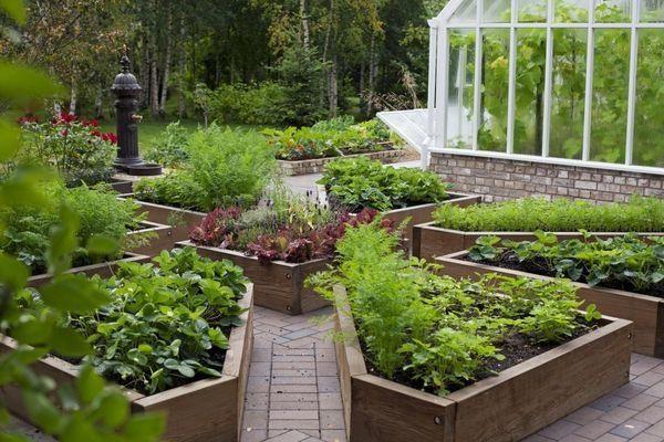 Декоративный огород для украшения дачного участка. 16432.jpeg