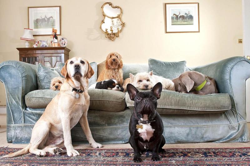 Совфед предложил ограничить число проживающих в квартирах кошек и собак. дом, квартира, животные, домашние животные, домашние питомцы, закон