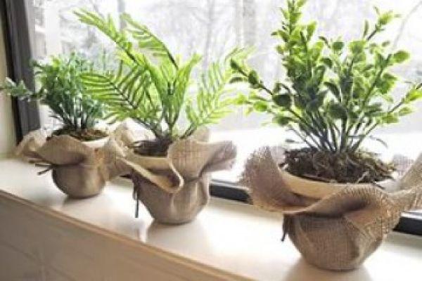Советы по выращиванию комнатных растений в одном горшке. 16524.jpeg