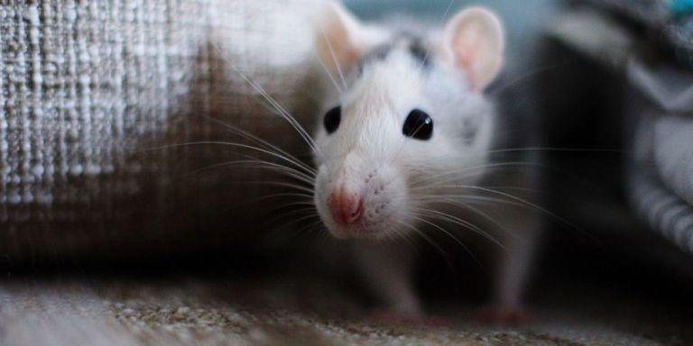 Как избавиться от мышей навсегда. 13561.jpeg