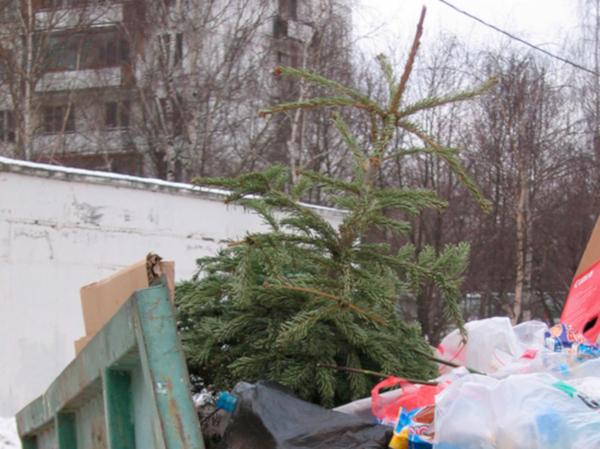 Спасатели рекомендовали избавляться от новогодних ёлок. 14613.jpeg