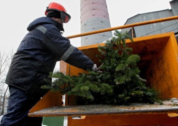 Сдать елки на переработку можно в 13 столичных парках. 14619.jpeg