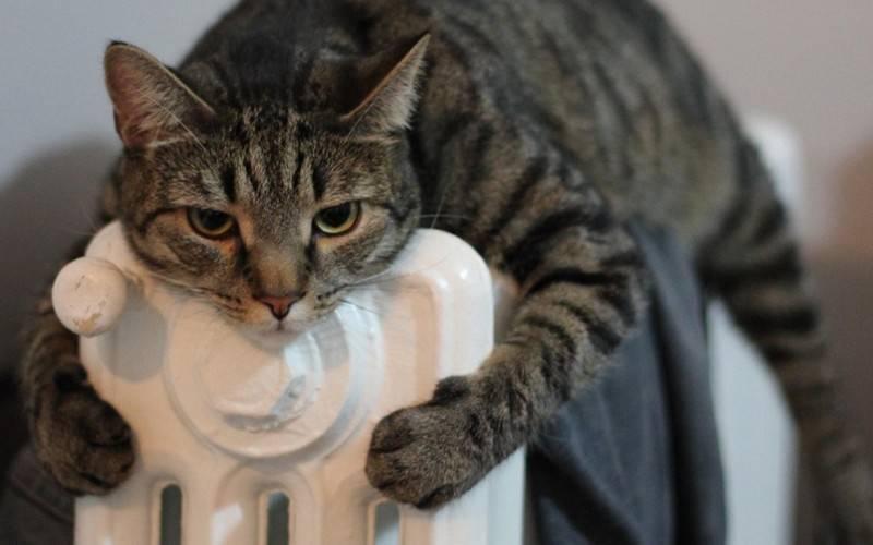 Выбираем обогреватель. Как сэкономить на электричестве и не замерзнуть - совет в жизнь. 13662.jpeg