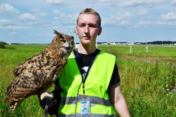 В Пулково нашли нарушения в работе службы по отпугиванию птиц. аэропорт, Пулково, птицы, Петербург