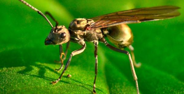 Энтомолог объяснил нашествие летающих муравьев в Москве. дом, квартира, улица, парк, сквер, муравьи, летающие муравьи, энтомолог, Москва