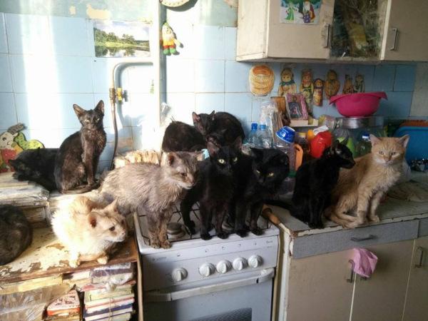 Тульские волонтеры спасли 30 кошек из ужасной квартиры. дом, квартира, животные, домашние животные, питомцы, кошки, Тула
