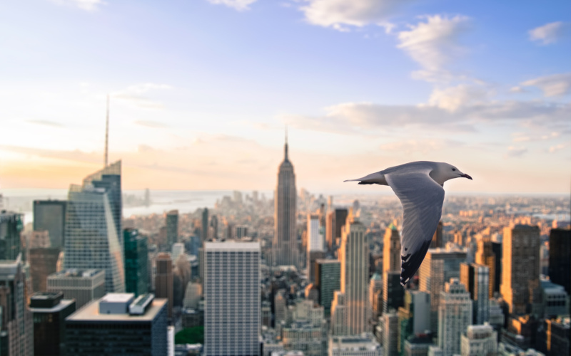 В США ежегодно из‑за столкновений с небоскребами погибают 600 млн птиц. 15789.jpeg