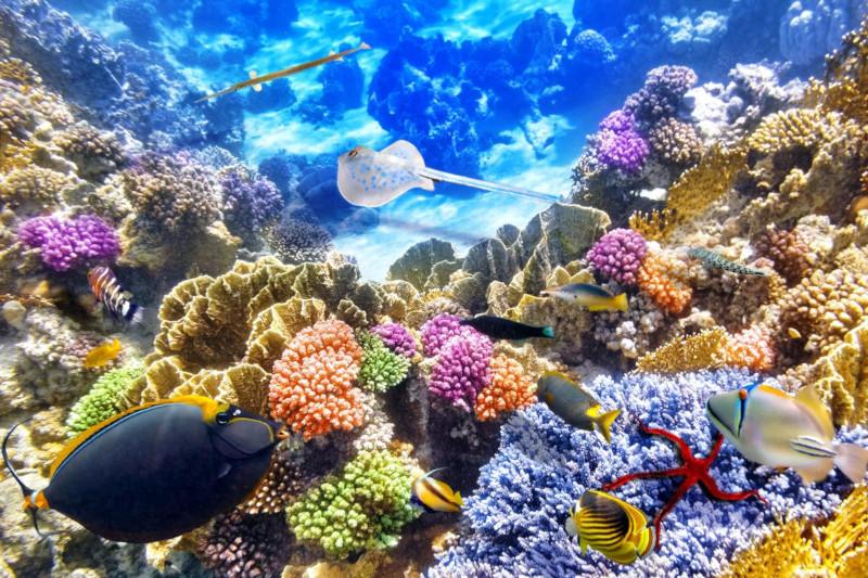 ОАЭ начали создание крупнейшего искусственного кораллового рифа. 15818.jpeg
