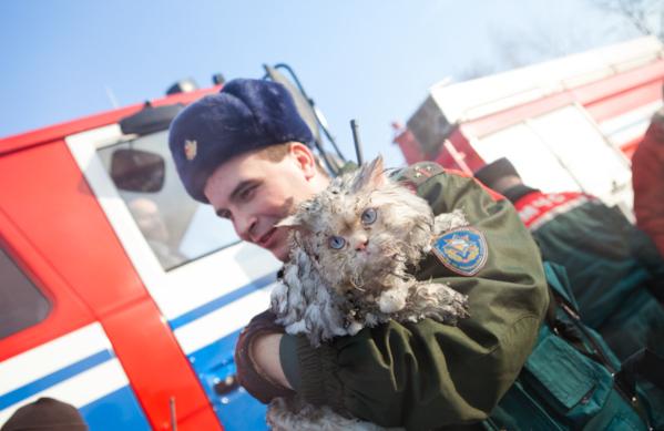 Сотрудники МЧС спасли собаку и кота из затопленной кипятком квартиры в Петербурге. 14930.jpeg