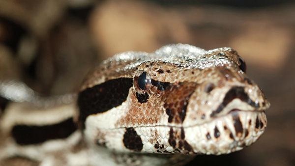В Австралии змеи прячутся от рекордной жары в туалетах и душевых кабинах. 14985.jpeg