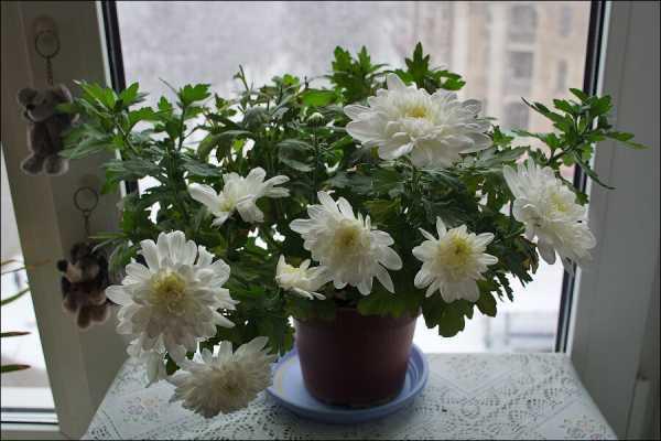 Лучшее комнатное растение для вашего знака зодиака (часть 2). 16991.jpeg