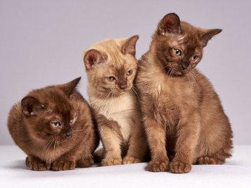В Японии обнаружили квартиру, в которой жили 163 кошки