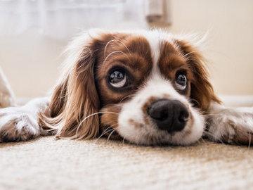 В США любопытный пес устроил в квартире пожар
