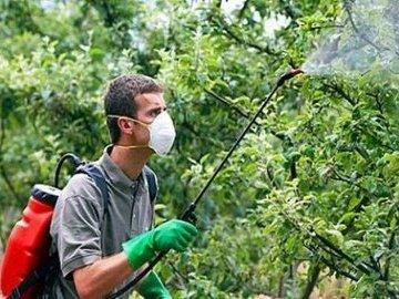 Как избавиться от насекомых на даче: пять эффективных способов