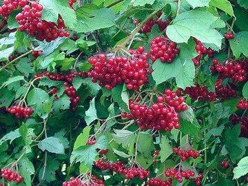 Топ выносливых растений для зимнего сада