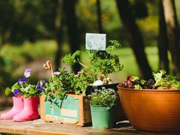 Как лучше всего выращивать растения в контейнерах