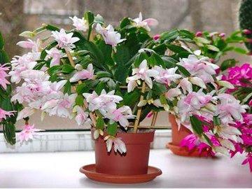Лучшее комнатное растение для вашего знака Зодиака (часть 1)