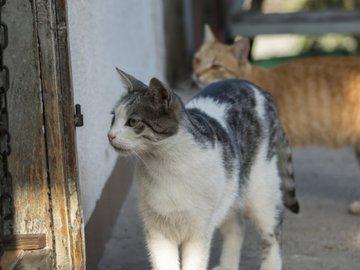 Что понадобится перед тем, как завести кошку