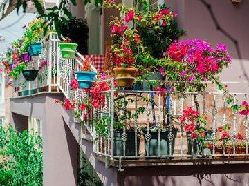Как превратить балкон в цветущую клумбу
