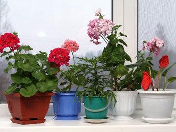 Восемь растений, которые нельзя держать дома