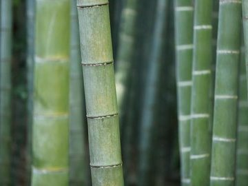 Бамбуковые обои в интерьере: плюсы и минусы