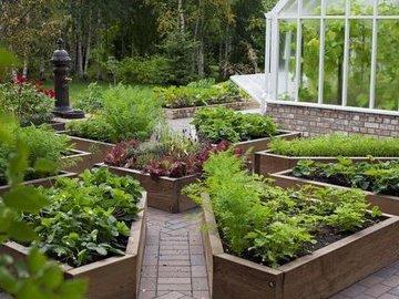 Создание декоративного огорода на дачном участке: десять шагов