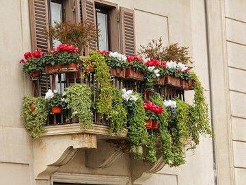 Пять красивых вьющихся цветов для украшения балкона