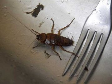 Избавляем дом от тараканов навсегда. Часть 2.