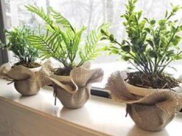 Как правильно выращивать комнатные растения вместе в одном горшке?