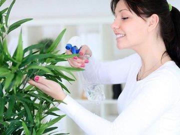 Восемь продуктов и лекарств, влияющих на состояние комнатных растений
