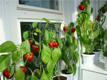 Как создать мини-огород на балконе