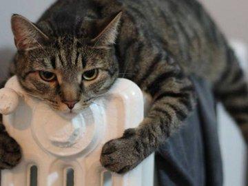 Выбираем радиатор отопления. Как сэкономить на электричестве и не замерзнуть