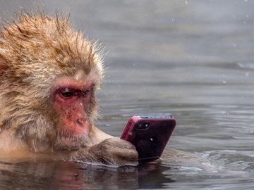 Не ловит мобильный? 12 лайфхаков помогут улучшить связь