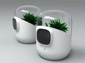 Комнатные растения - фильтры (часть 1)